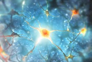 Neuroeducación: El fascinante mundo del cerebro que aprende (Edición 1)