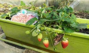 Creación de un huerto y de un jardín como espacios de aprendizaje colaborativo y de convivencia inclusiva. (Edición 1)
